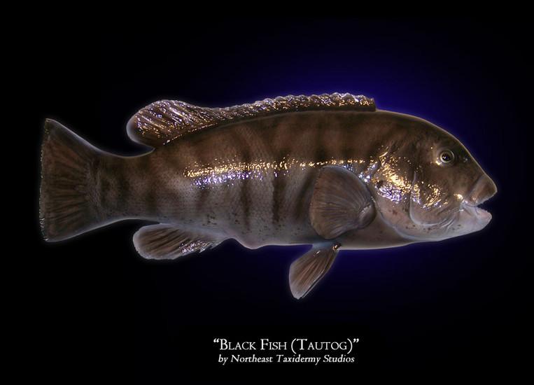 big fish quotes