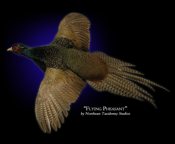 Flying Pheasant Mounts