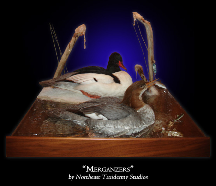 Mergansers Mounts