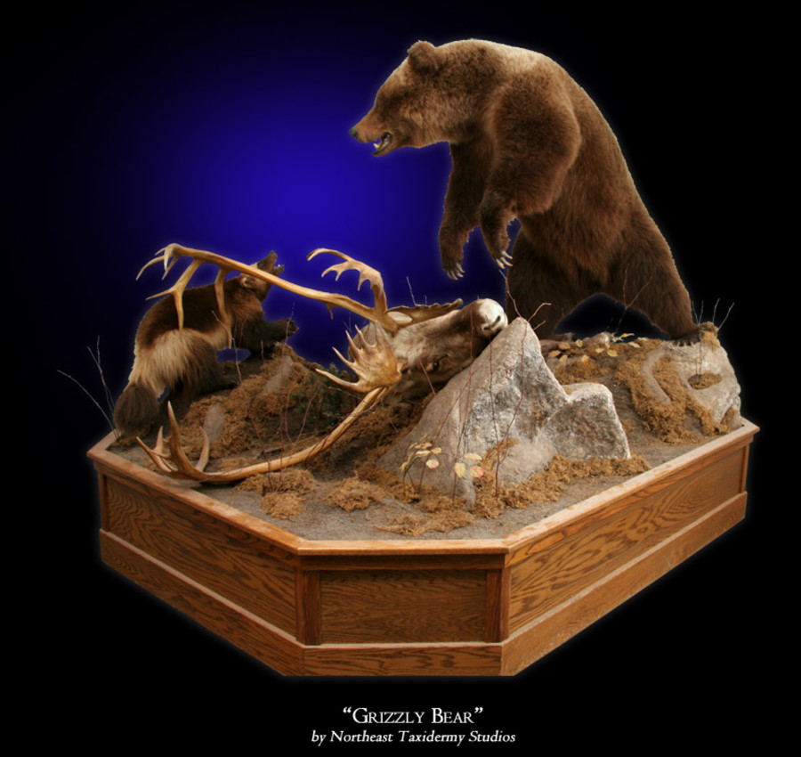 Grizzly Bear Mounts.