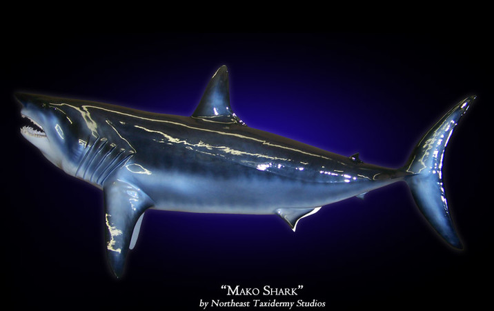 Mako Shark Mounts