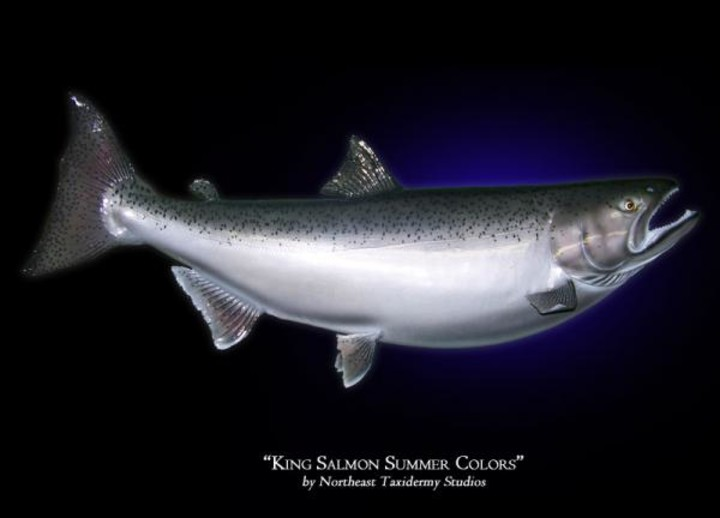 King Salmon Summer Colors