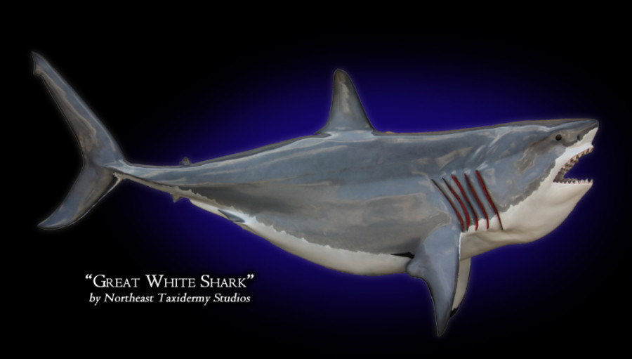 Great White Shark Mounts