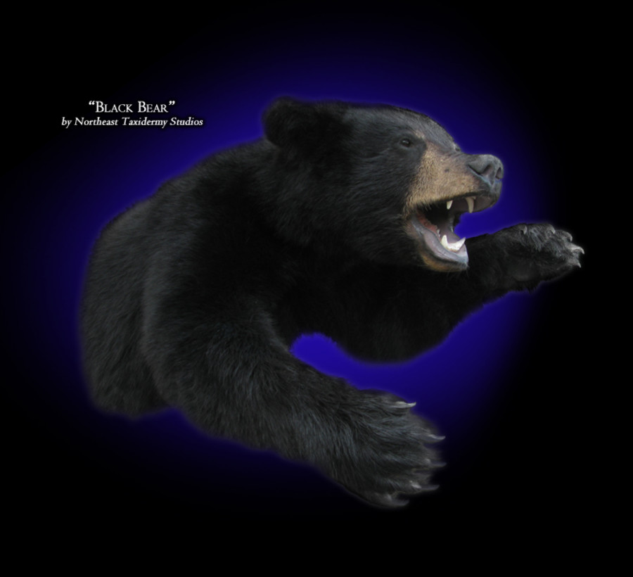 Half Body Black Bear Mounts