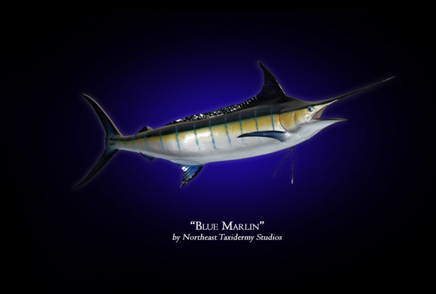 Blue Marlin Mounts.