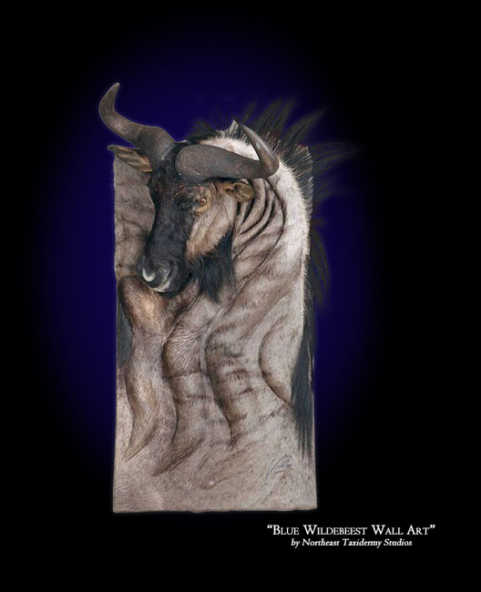 Blue Wildebeest Wall Art