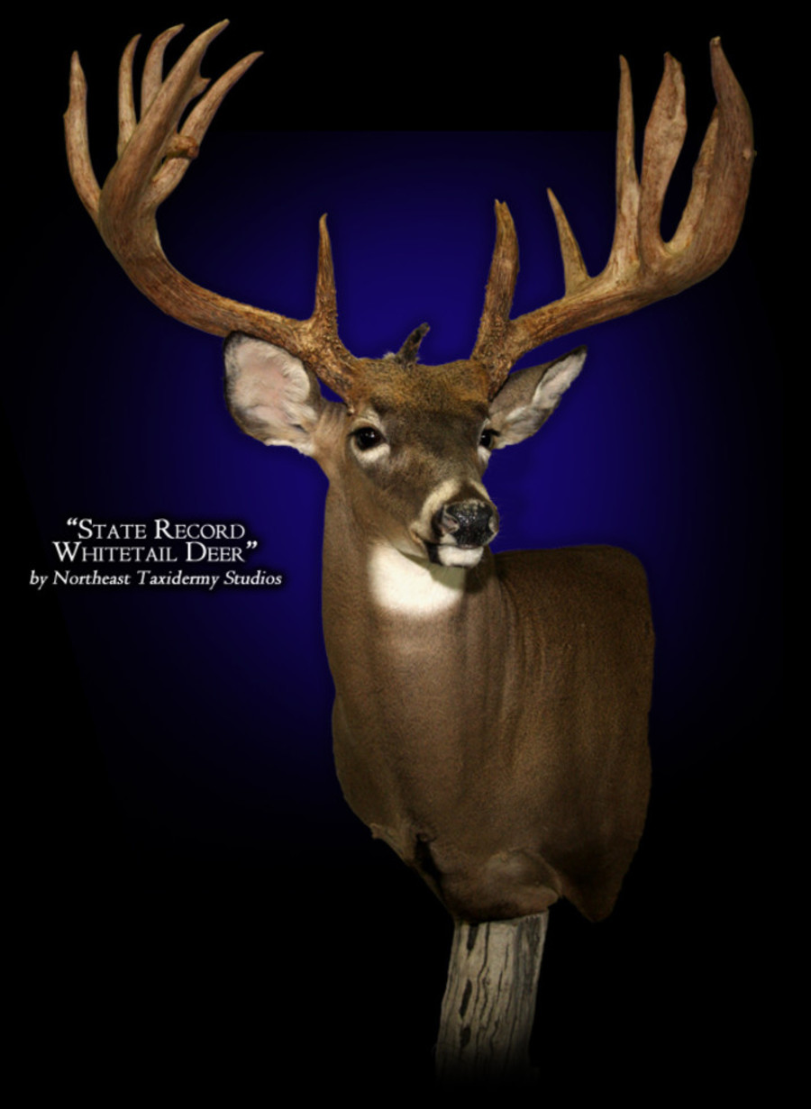 State Record Whitetail Deer Mounts.