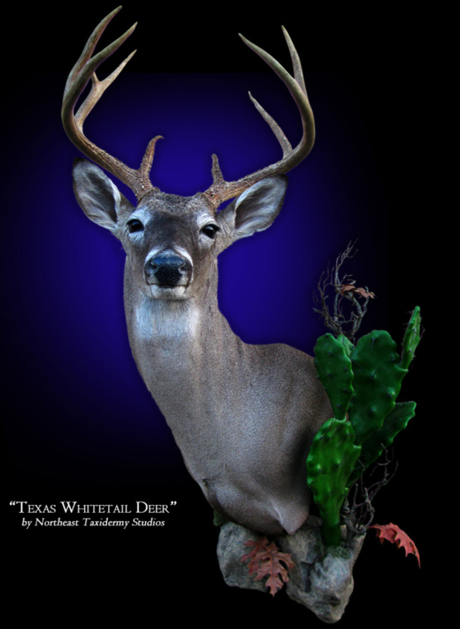 Whitetail Deer Mount Mounts.