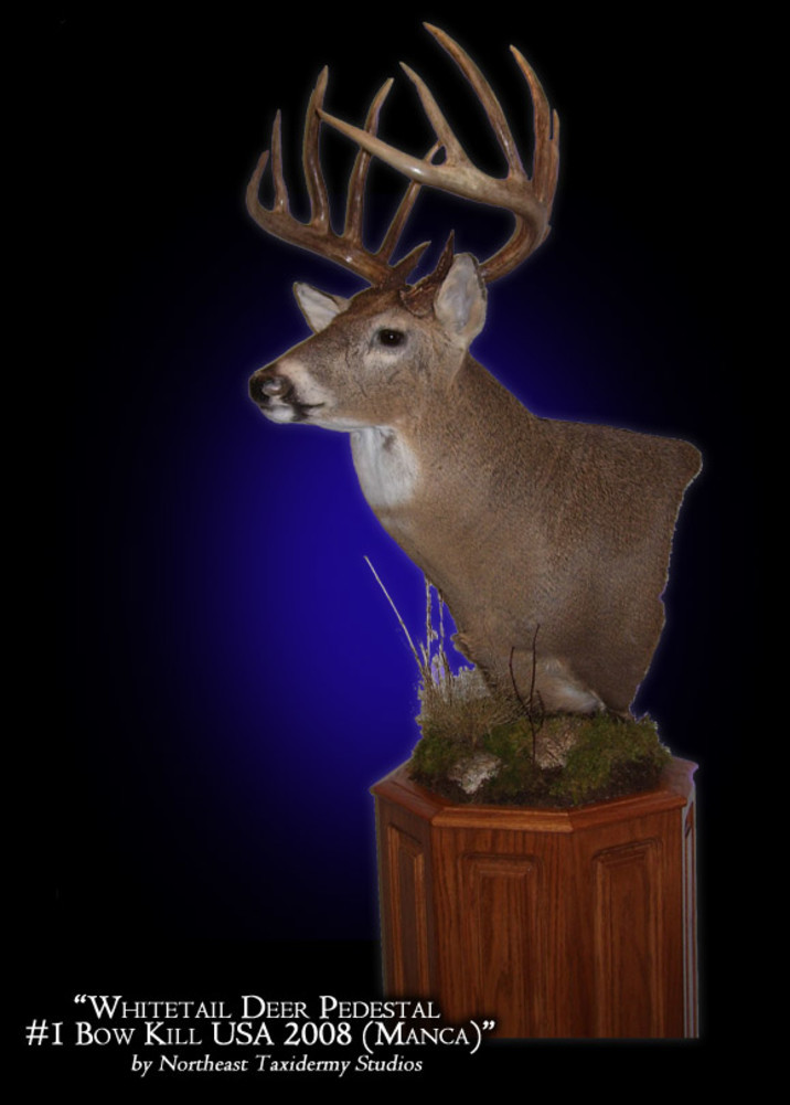Whittail Deer Pedestal #1 Bow Hunt Mounts