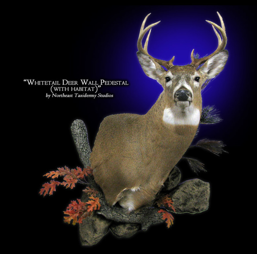 Whitetail Deer Wall Pedestal with Habitat Mounts.