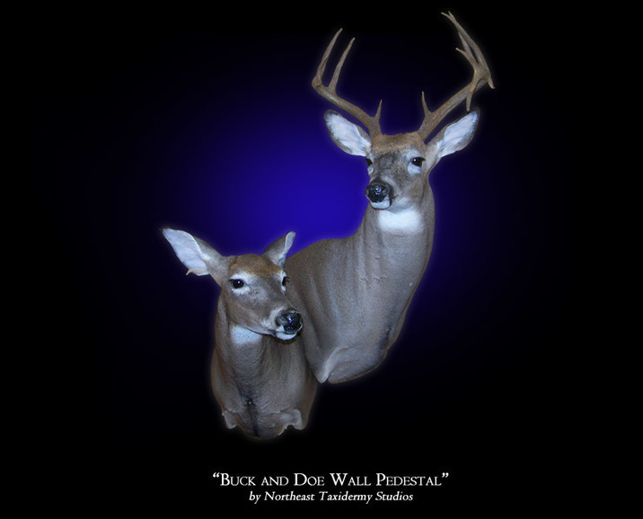 Buck and Doe Whitetail Deer Mount Mounts