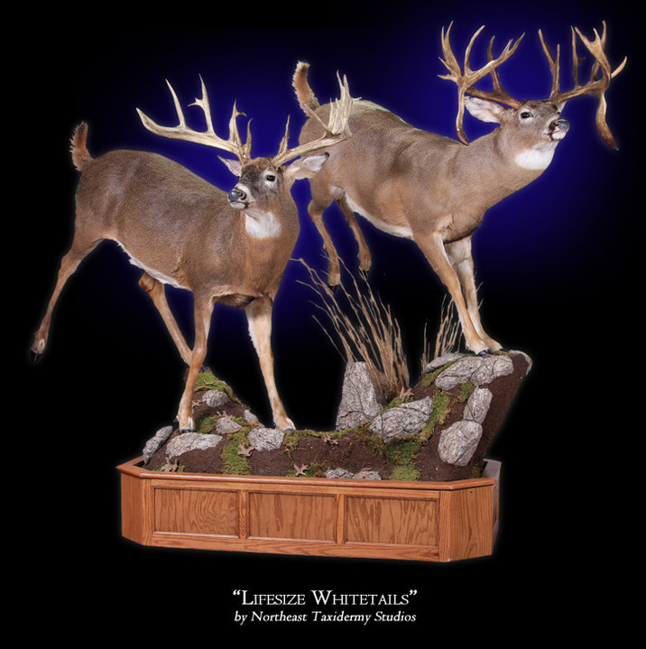 Lifesize Whitetail Deer Mounts