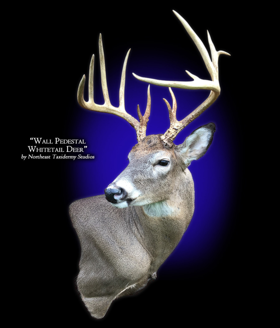 Whitetail Deer Wall Pedestal Mounts