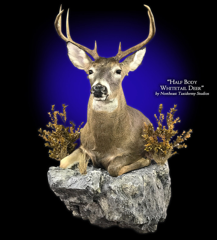 Half Body Whitetail Deer Mounts