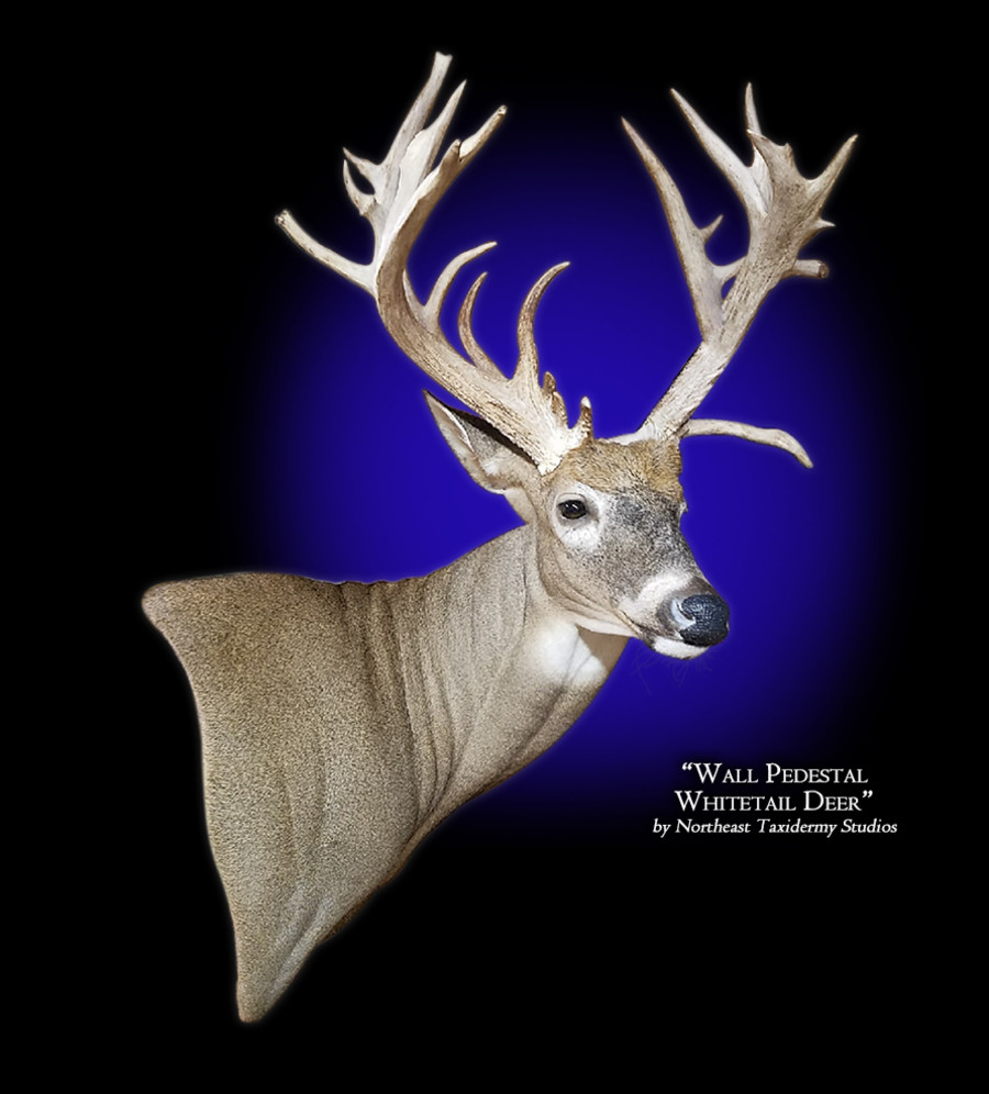 Whitetail Deer Wall Pedestal Right Mounts