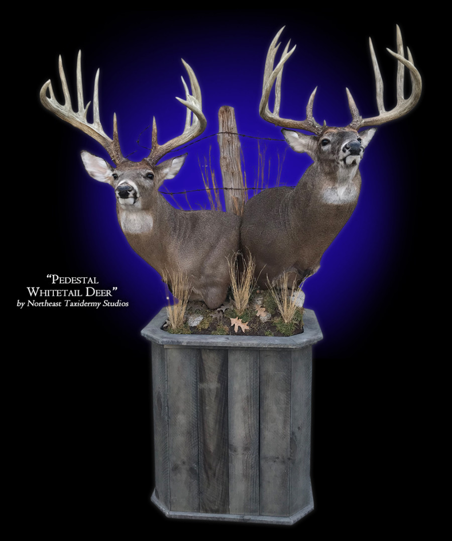 Whitetail Deer Pedestal  Mounts