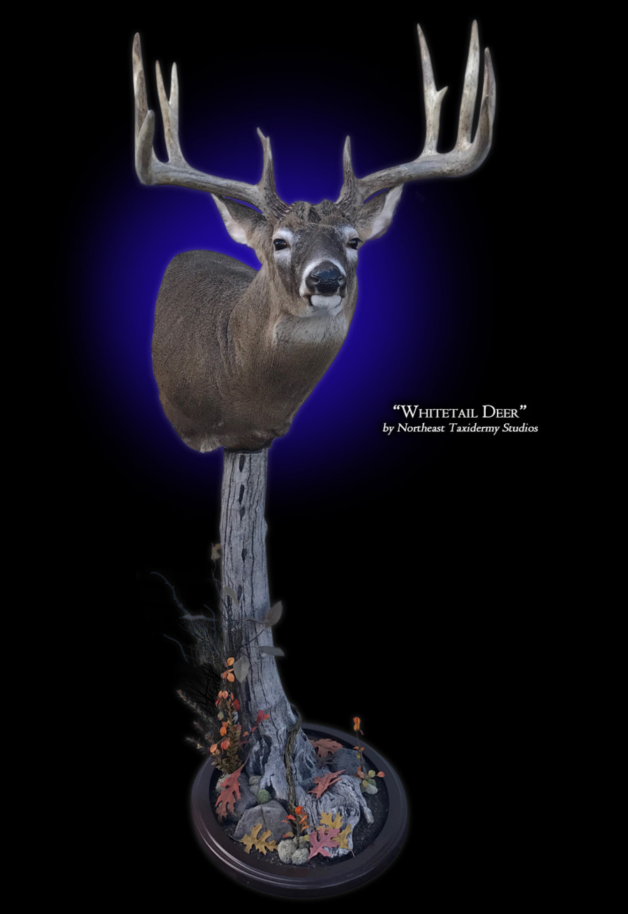 Whitetail Deer Pedestal Mount Mounts.