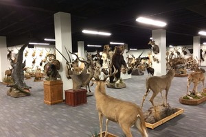 Taxidermy Trophy Room Installation