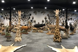 Taxidermy Trophy Room Design