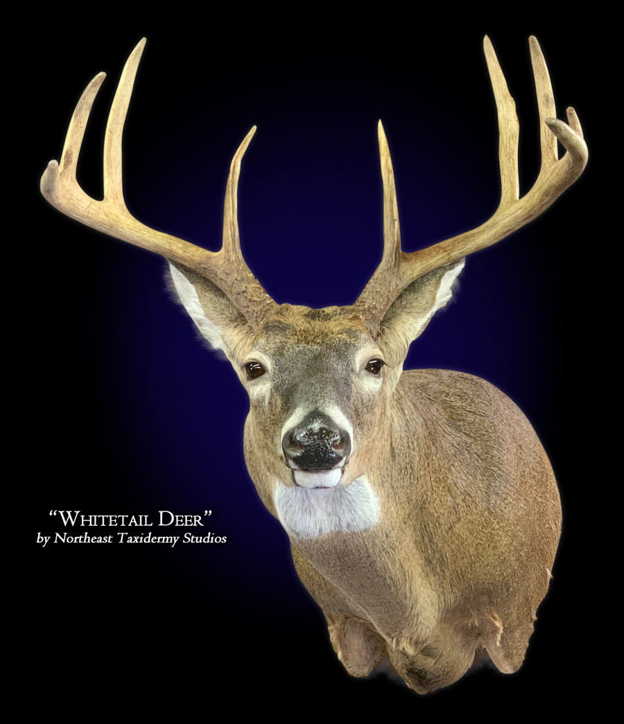 Whitetail Deer Full Sneak Left Mounts.