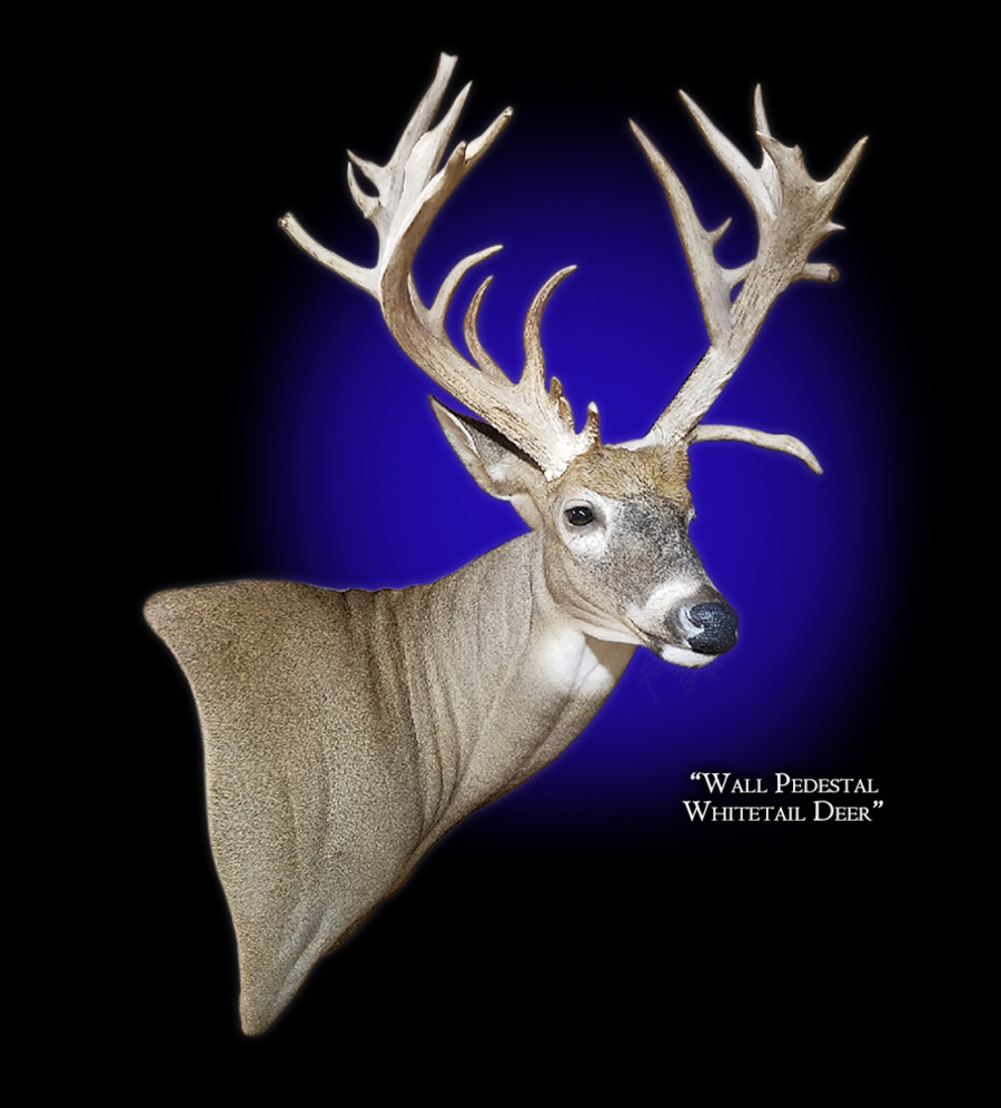 Whitetail Deer Wall Pedestal Right Mounts.