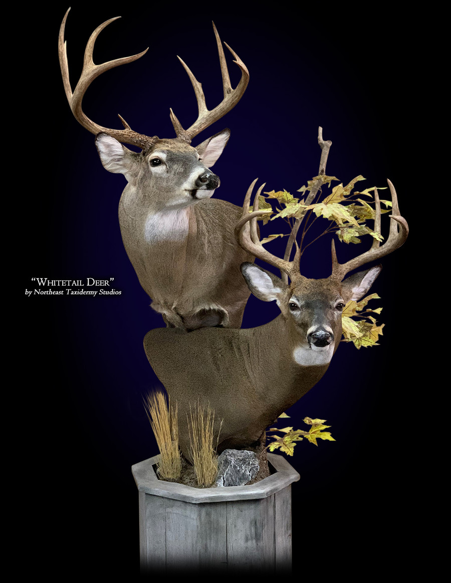Whitetail Deer Pedestal Mounts.
