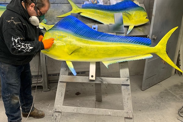 Mahi-mahi reproduction fish mount