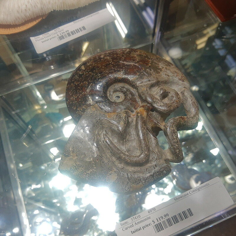 Carved Ammonite