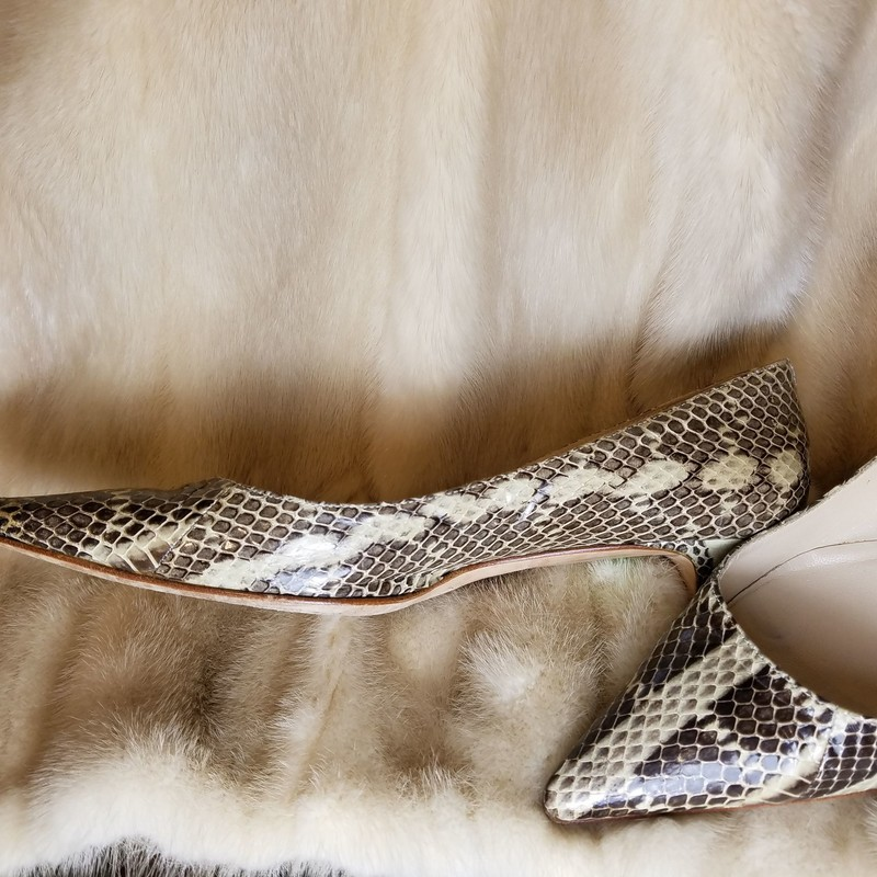 SNAKE SKIN KITTEN<br />  Size: 36.5<br /> NEW $480<br /> GREAT USED CONDITION