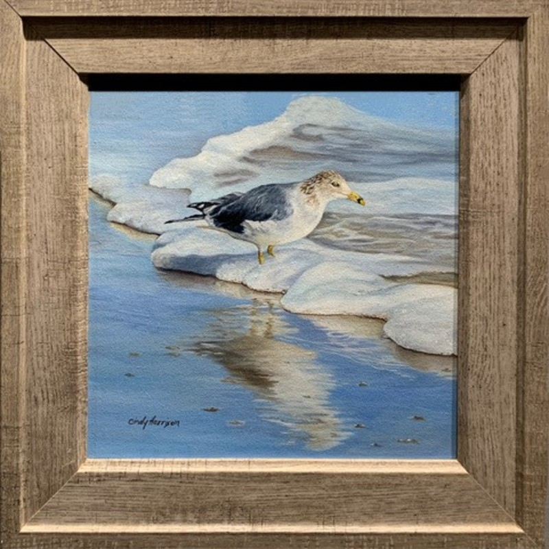 "Title: J L Seagull, Artist: Cindy Harrison, Medium: Oil, Size: 12""x12"" with frame 16""x16""  Statement: This Ring-billed gull was inspired by one of many birdwatching trips to the Outer Banks. Jonathan Livingston Seagull immediately came to mind."