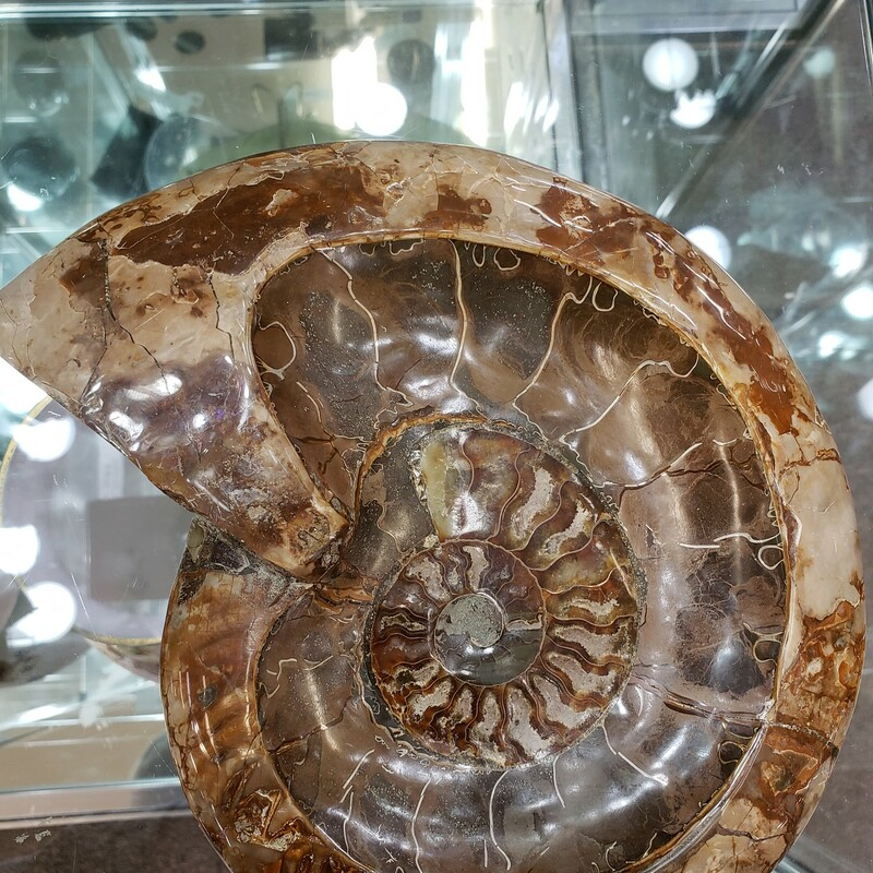 Fossil Ammonite Bowl XL,
